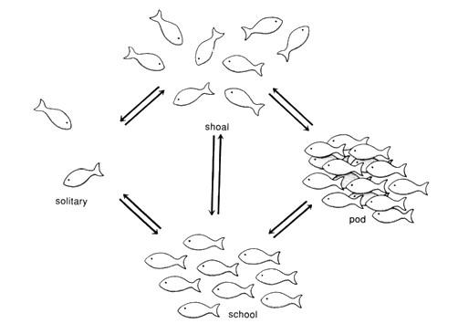 struttura-e-funzione-dei-banchi-di-pesce