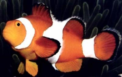 Il commercio dei pesci per acquario for Vasche per tartarughe marine
