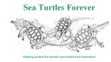 Sea Turtles Forever